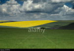 Rape field on the South Downs Sussex