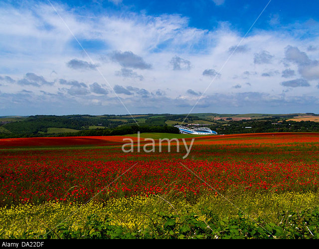 Sea of poppies, Falmer:  towards the Amex stadium, Brighton and Hove Albion's home, South Downs National Park, Sussex, England