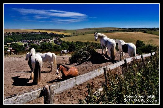 Horses on the South Downs near Brighton Racecourse